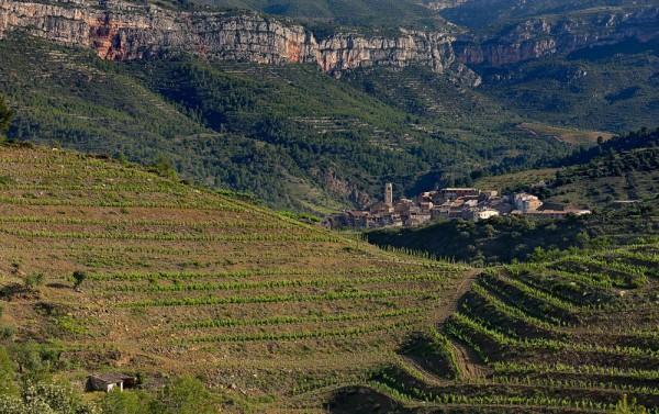 Vinicola Sarral wijnen - Cataluna